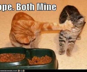 cat, cats, and funny cats image