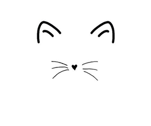 black and white, cat, and whiskers image