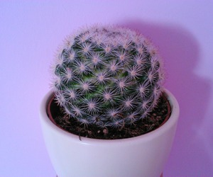 cactus, grunge, and plant image