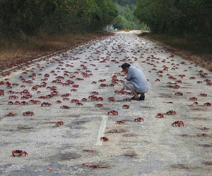 christmas island, crabs, and millions image