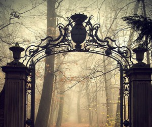 autumn, gate, and forest image