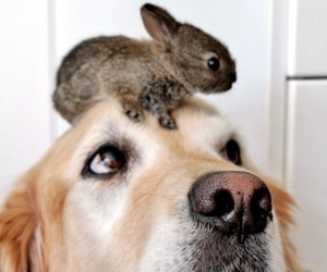 dog, bunny, and animal image
