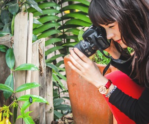 art, photography, and butterfly image