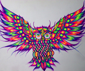 owl, art, and draw image