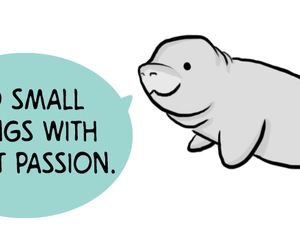 encouraging, manatee, and seal image