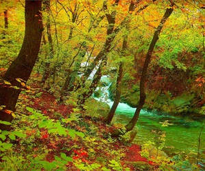 autumn, colors, and river image