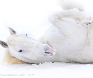 horse, white, and snow image