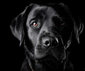 dog and black image