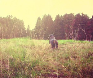 dog, puppy, and forest image