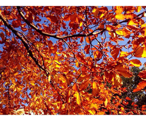 autumn, fall, and weheartit image