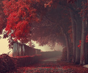 red, autumn, and fall image