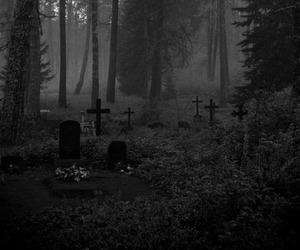 black and white, forest, and cemetery image