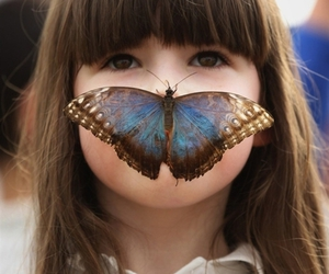 butterfly, girl, and morpho image