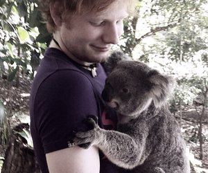 ed sheeran, Koala, and ed image