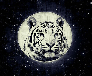 stars, tiger, and cute image