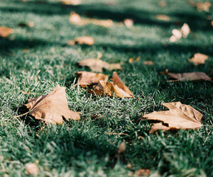 leaves, photography, and grass image