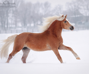 riding, love, and horse image