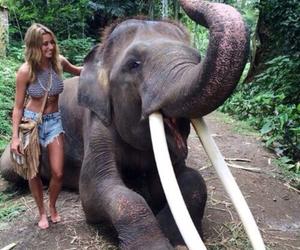 elephant, summer, and animal image