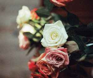 flowers, red, and white image