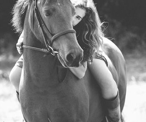 black & white, cute, and horse image
