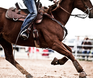 chestnut, Cowgirl, and gallop image