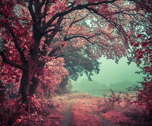 pink, tree, and forest image