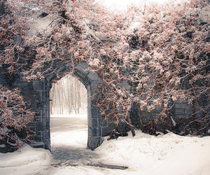 gate, trees, and winter image