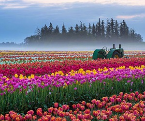 beautiful, colorful, and flowers image