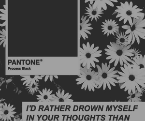 black and white, flower, and pantone image