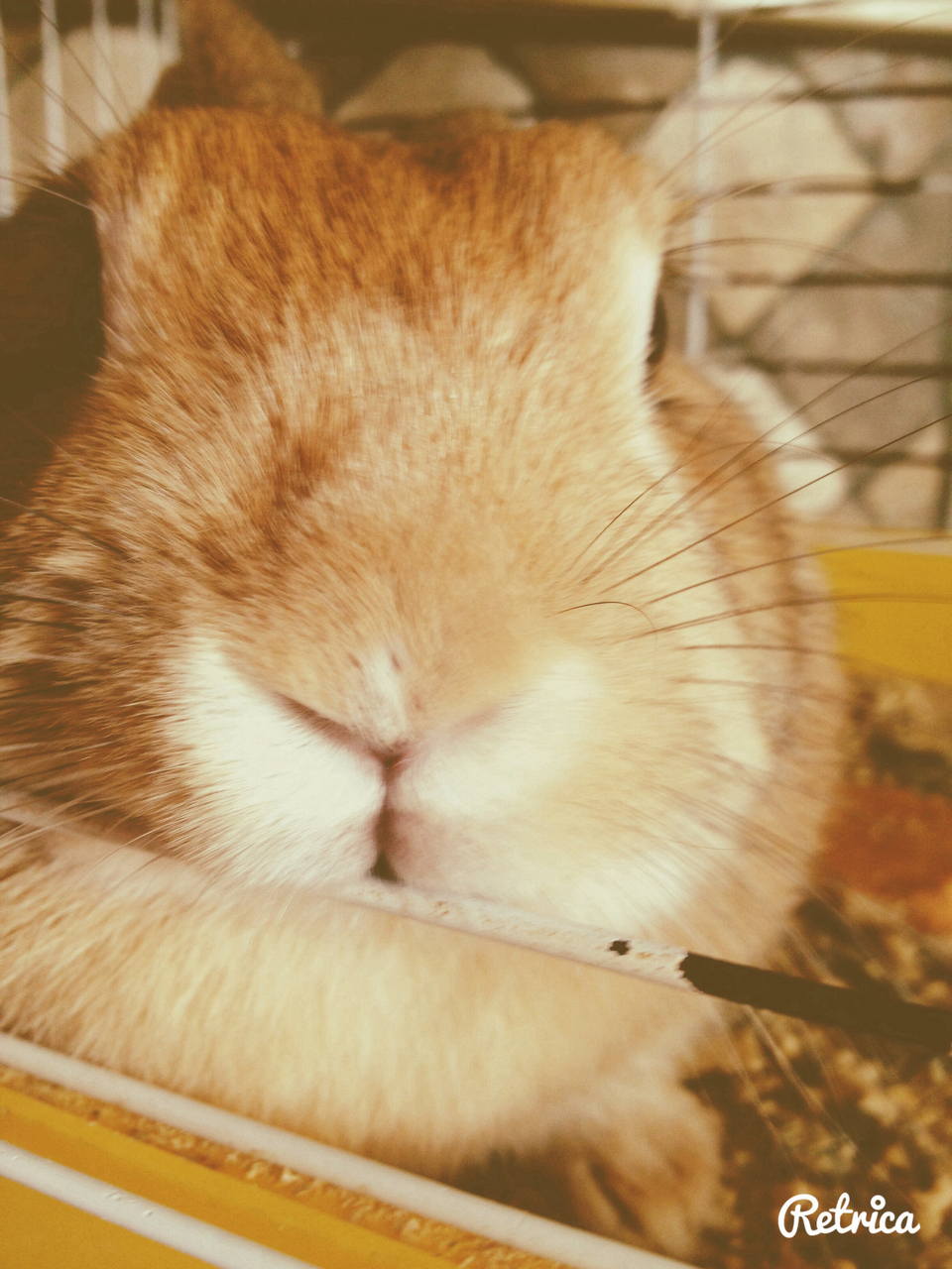 bunny, cuteness, and cutie image