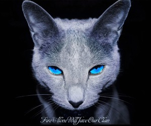 cat and blue image