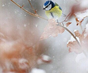 animals, bird, and cold image