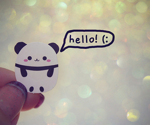 panda, cute, and hello image
