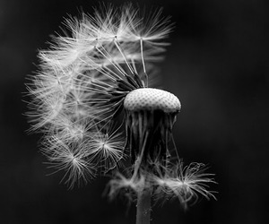 b&w, black and white, and nature image