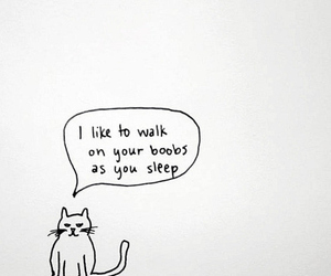 awesome, cat, and quote image