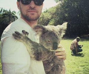 justin timberlake and Koala image