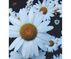 daisy, flower, and girl image