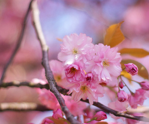 blossom, branch, and flower image