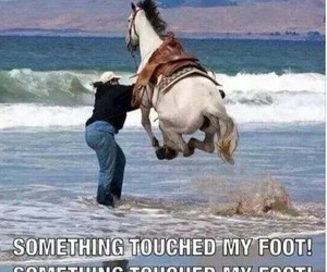 horse, funny, and lol image