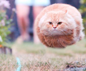 hovercat image