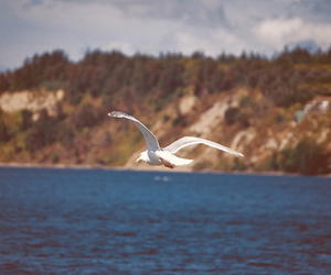 america, gull, and natural image