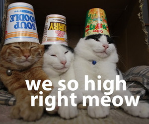 cat, cats, and high image