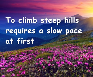 climb, flower, and hills image