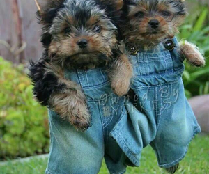 denim, overalls, and puppies image