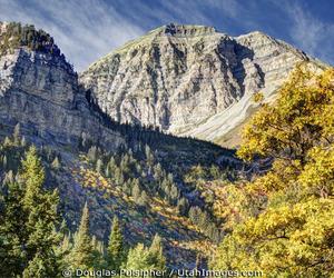 aspen, autumn, and canyon image