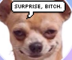 bitch and surprise image