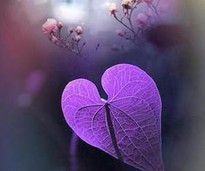 background, beauty, and heart image