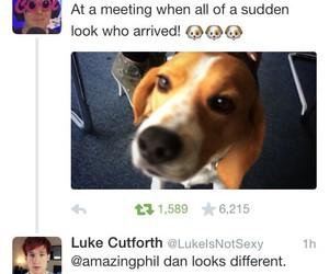 british, dan, and dog image