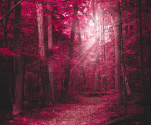 forest, outside, and pink image