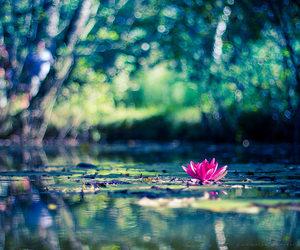 lake and lotus image